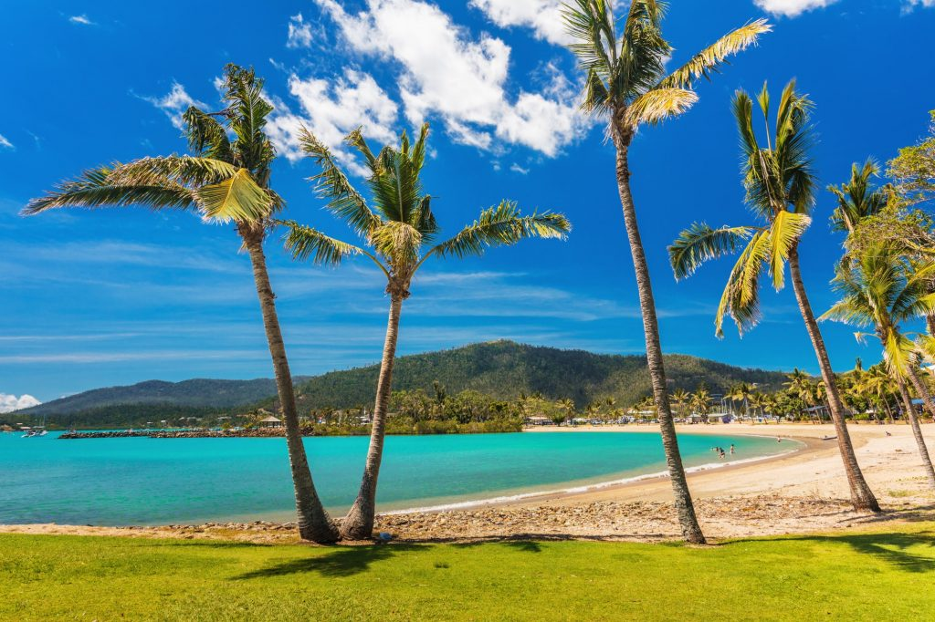 Sandy beach with palm trees, Airlie Beach, Whitsundays, Queensla